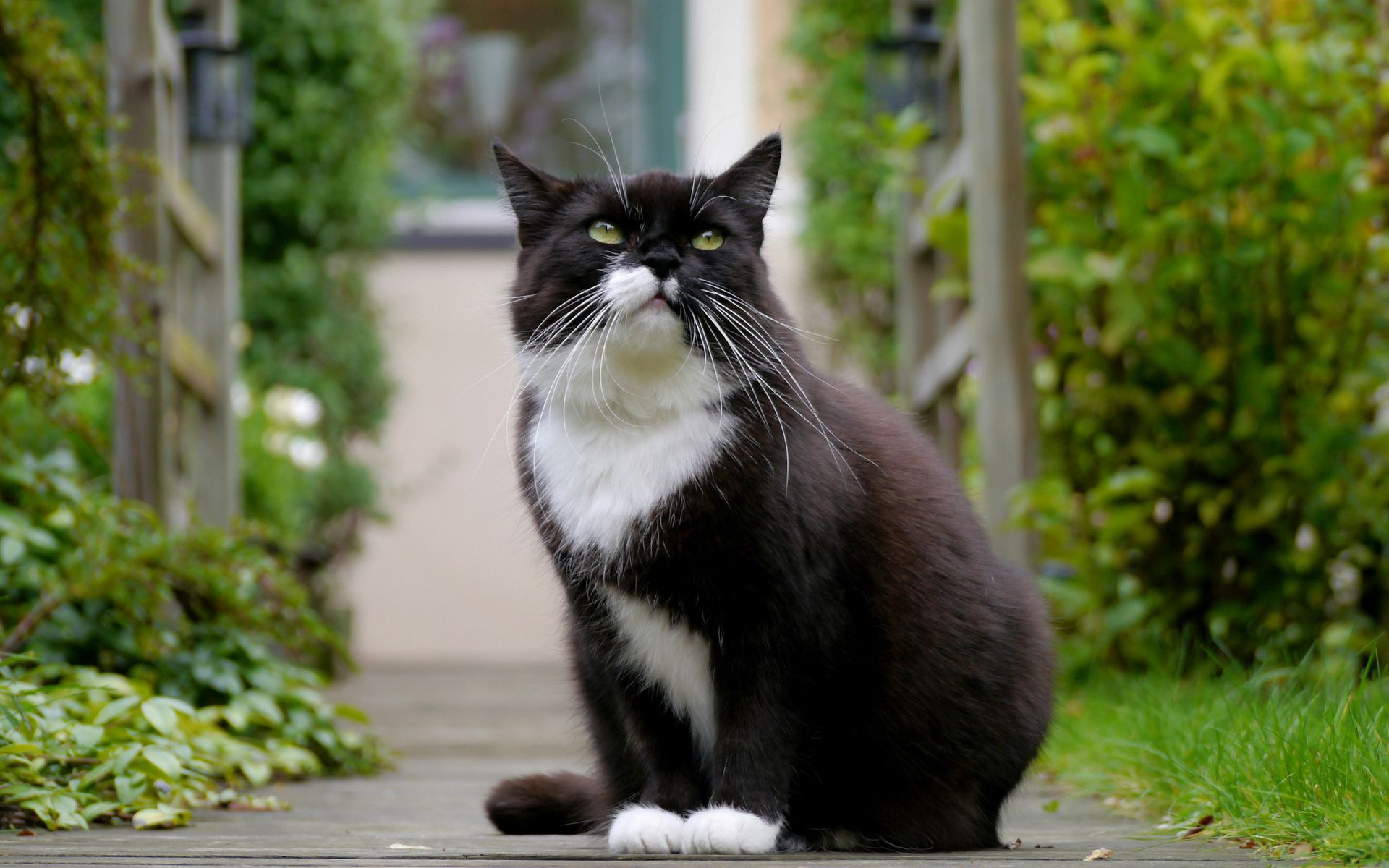 109433 download wallpaper Animals, Cat, Fat, Thick, Sight, Opinion, Spotted, Spotty, Sit screensavers and pictures for free
