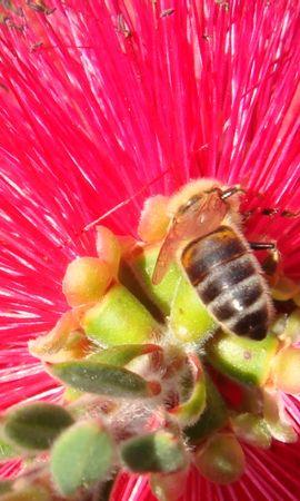 25427 скачать обои Растения, Цветы, Насекомые, Пчелы - заставки и картинки бесплатно