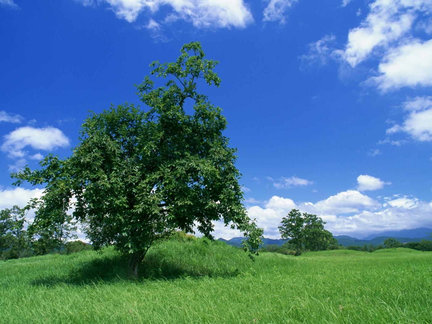 25807 скачать обои Пейзаж, Деревья, Небо, Облака - заставки и картинки бесплатно