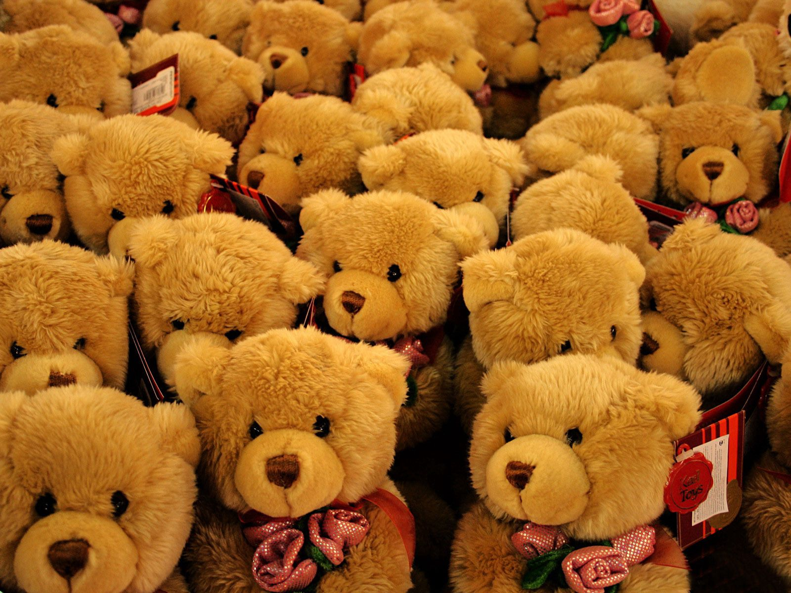 52562 Screensavers and Wallpapers Bears for phone. Download Roses, Bears, Miscellanea, Miscellaneous, Toy pictures for free