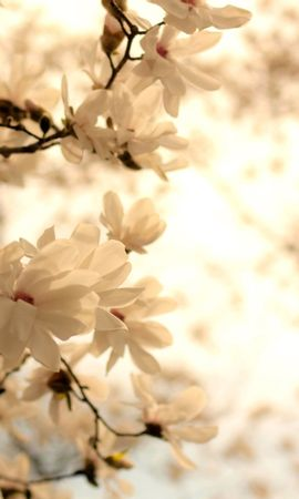41711 descargar fondo de pantalla Plantas, Paisaje, Flores: protectores de pantalla e imágenes gratis