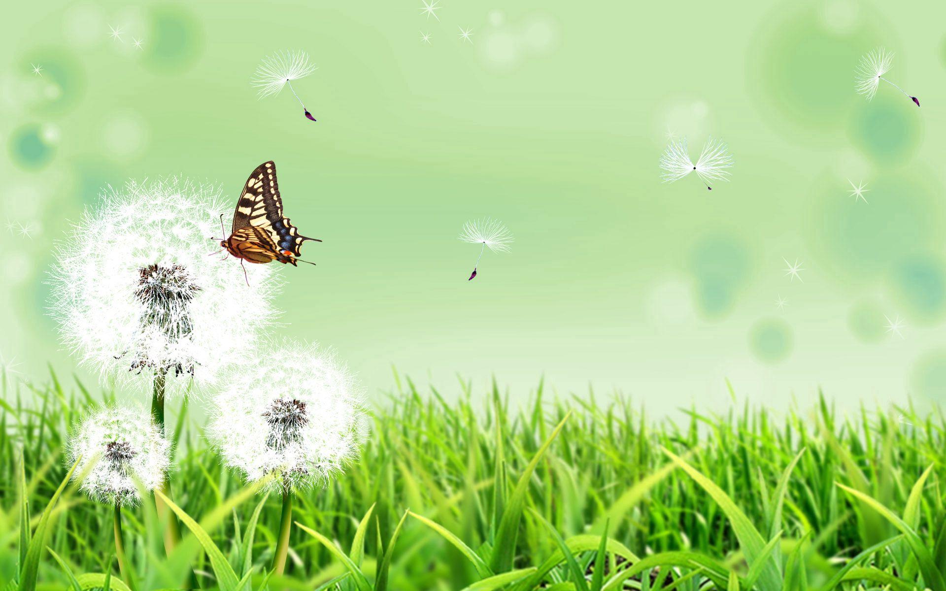 114572 Hintergrundbild herunterladen Natur, Grass, Löwenzahn, Vektor, Schmetterling - Bildschirmschoner und Bilder kostenlos