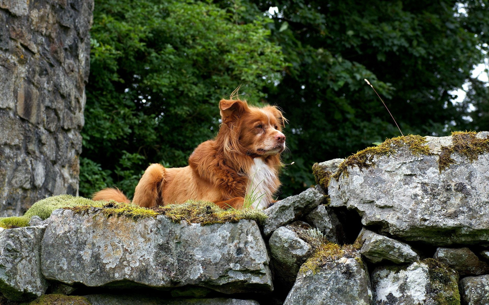 115522 download wallpaper Animals, Dogs, Stones, Elevation, Puppy screensavers and pictures for free