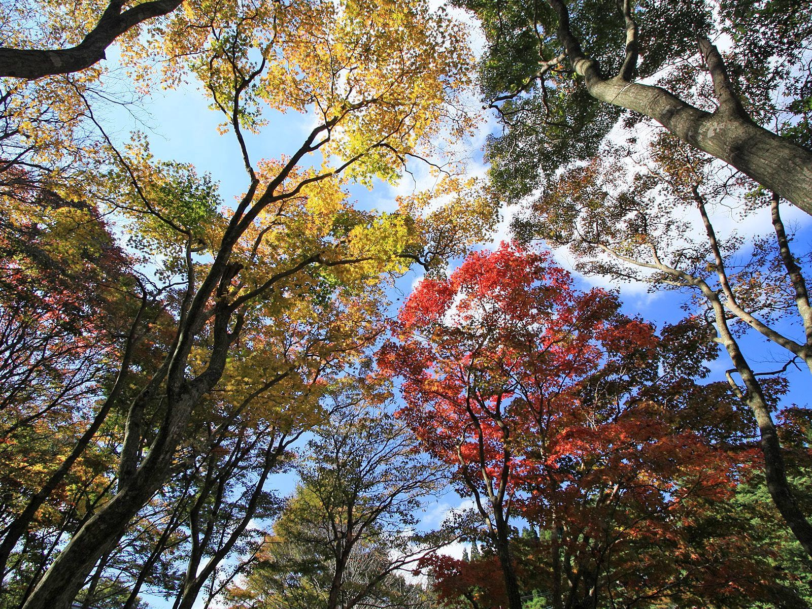 104594 download wallpaper Nature, Trees, Sky, Leaves, Up, Top screensavers and pictures for free
