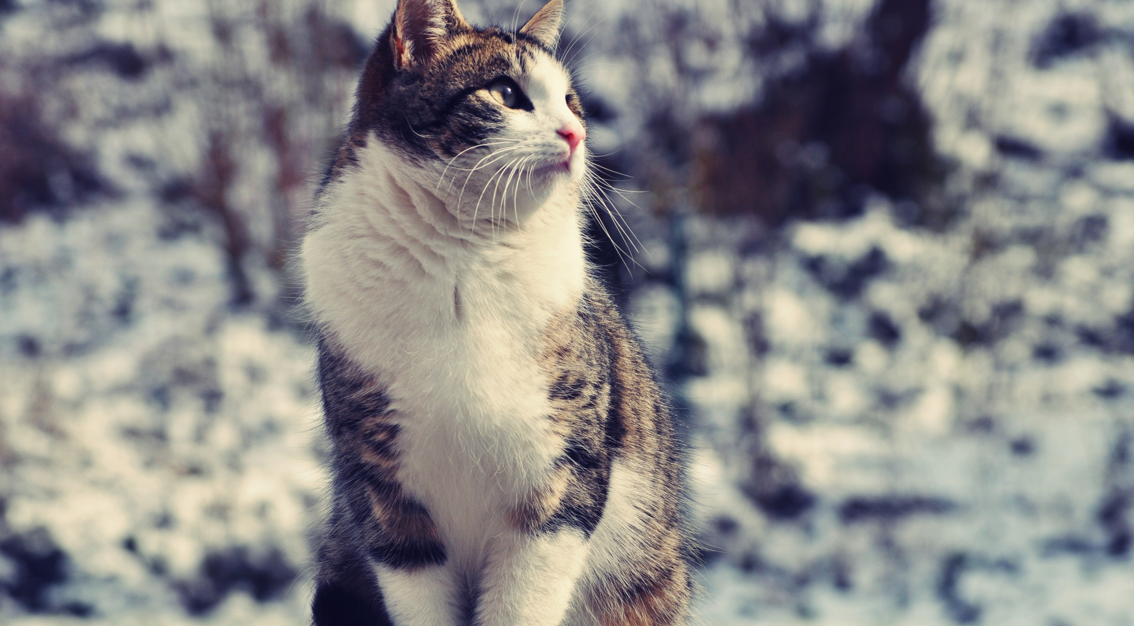 53768 Screensavers and Wallpapers Sit for phone. Download Animals, Sit, Cat, Spotted, Spotty, Fat, Thick pictures for free