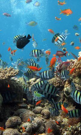 21783 скачать обои Животные, Море, Рыбы, Кораллы - заставки и картинки бесплатно