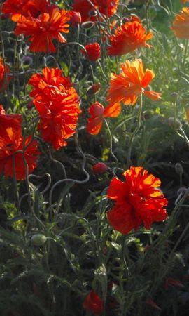 439 скачать обои Растения, Цветы - заставки и картинки бесплатно