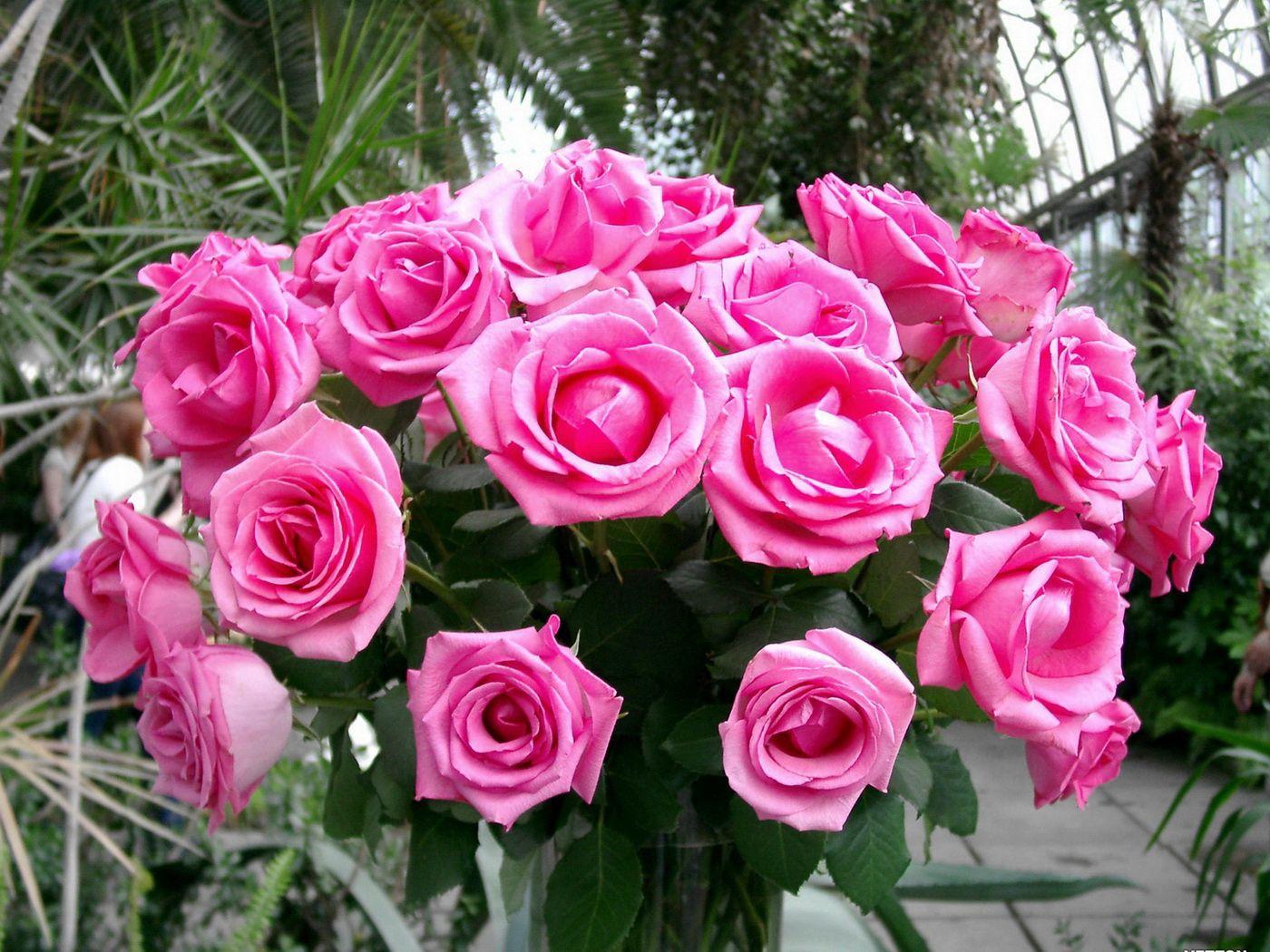 54594 скачать обои Букет, Розы, Цветы, Красота, Розовые, Нежные - заставки и картинки бесплатно
