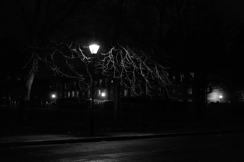80809 скачать обои Ночь, Дерево, Фонарь, Чб - заставки и картинки бесплатно