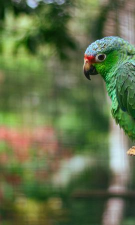 149611 baixar papel de parede Animais, Papagaios, Multicolorido, Motley, Pássaro, Legal, Amor - protetores de tela e imagens gratuitamente