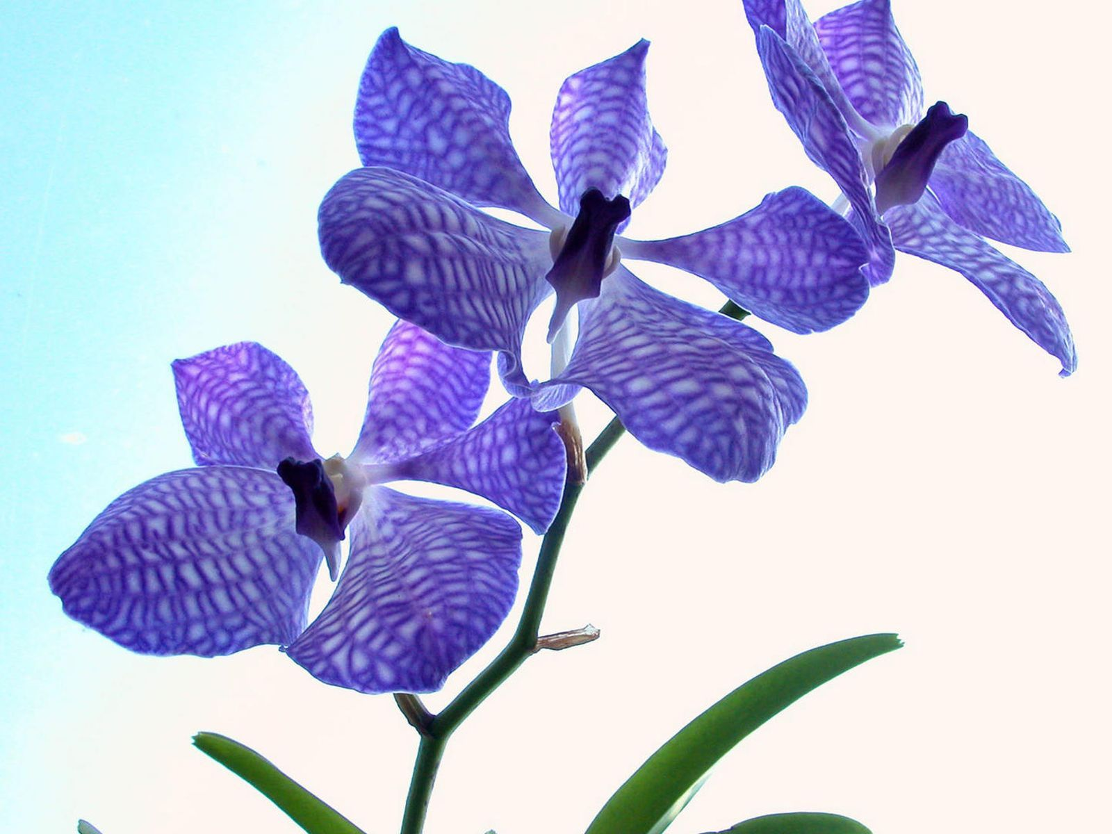 9403 descargar fondo de pantalla Plantas, Flores: protectores de pantalla e imágenes gratis