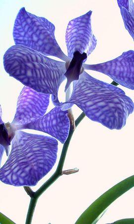 9403 скачать обои Растения, Цветы - заставки и картинки бесплатно