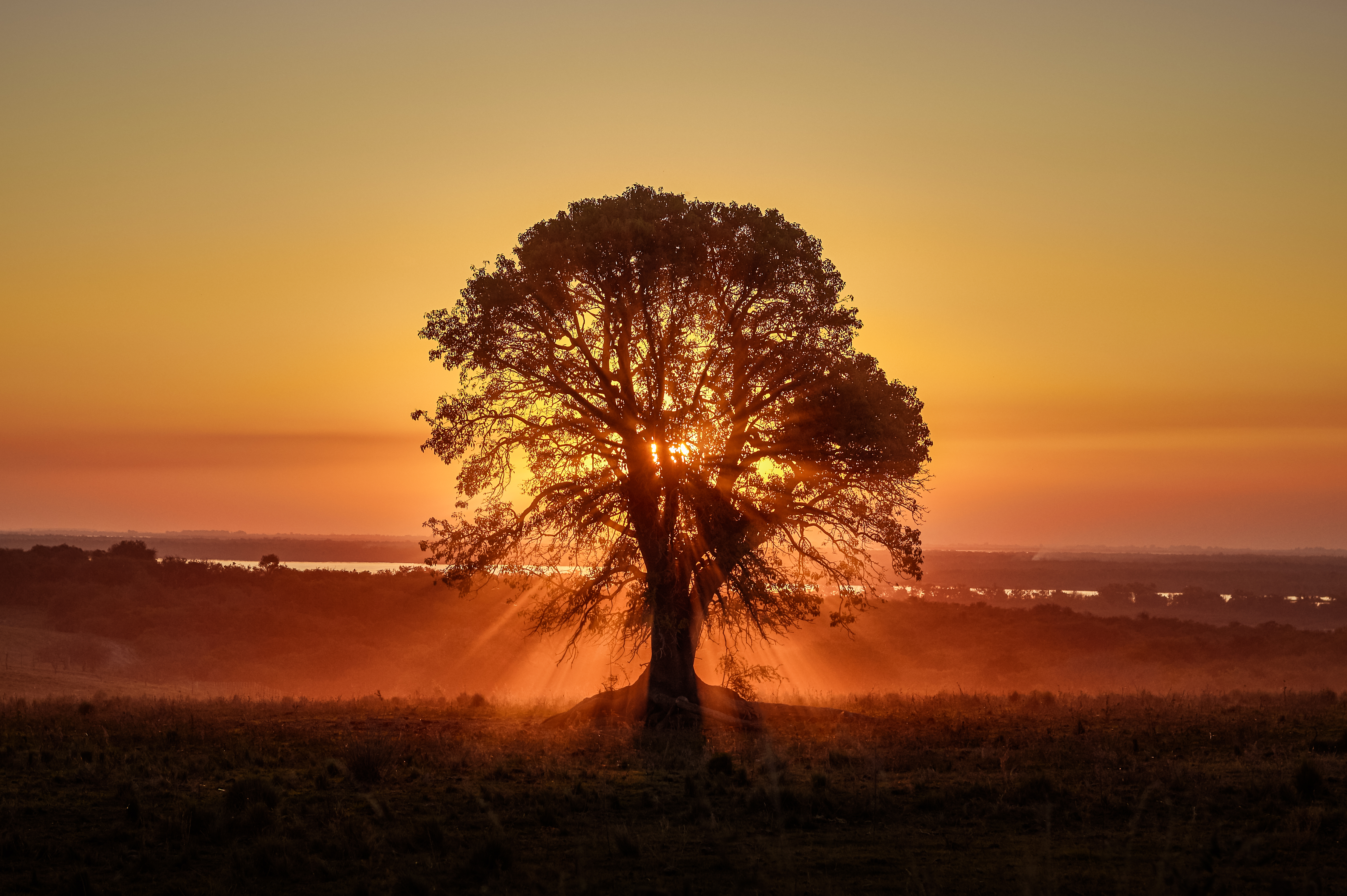 97085 Screensavers and Wallpapers Beams for phone. Download Nature, Sunset, Wood, Beams, Rays, Tree, Sunlight pictures for free