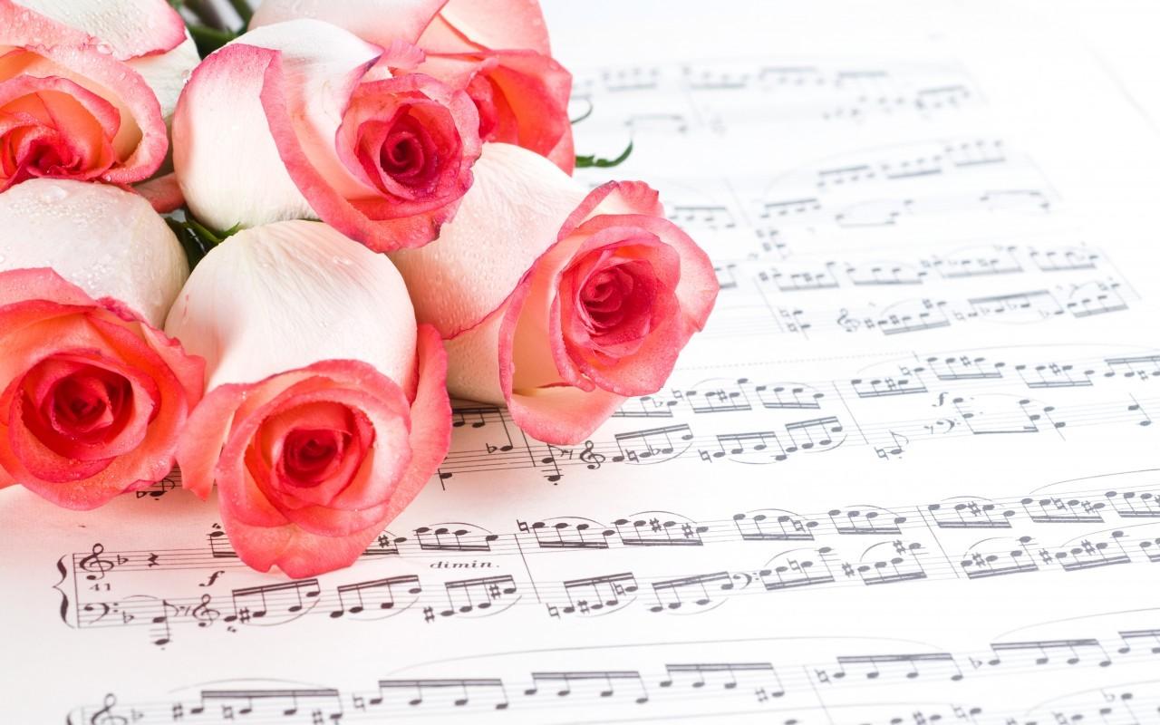 16107 скачать обои Растения, Цветы, Розы - заставки и картинки бесплатно