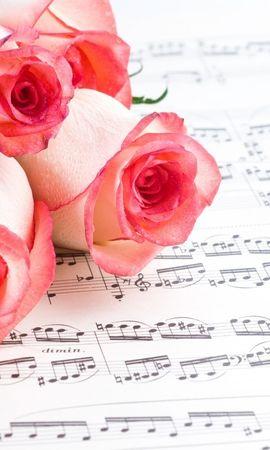 16107 descargar fondo de pantalla Plantas, Flores, Roses: protectores de pantalla e imágenes gratis