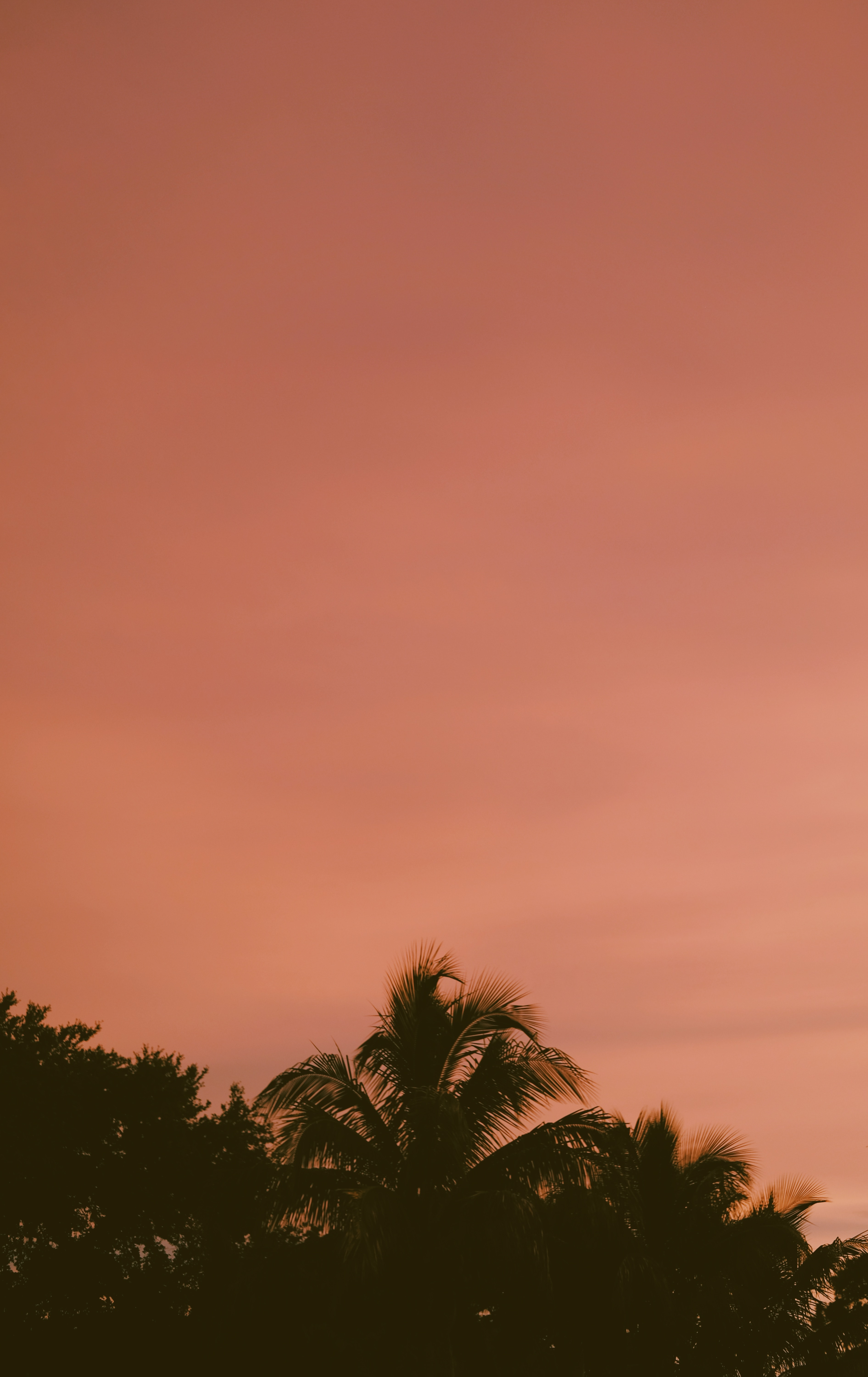 113188 download wallpaper Nature, Sky, Dusk, Twilight, Sunset, Dark, Palms screensavers and pictures for free