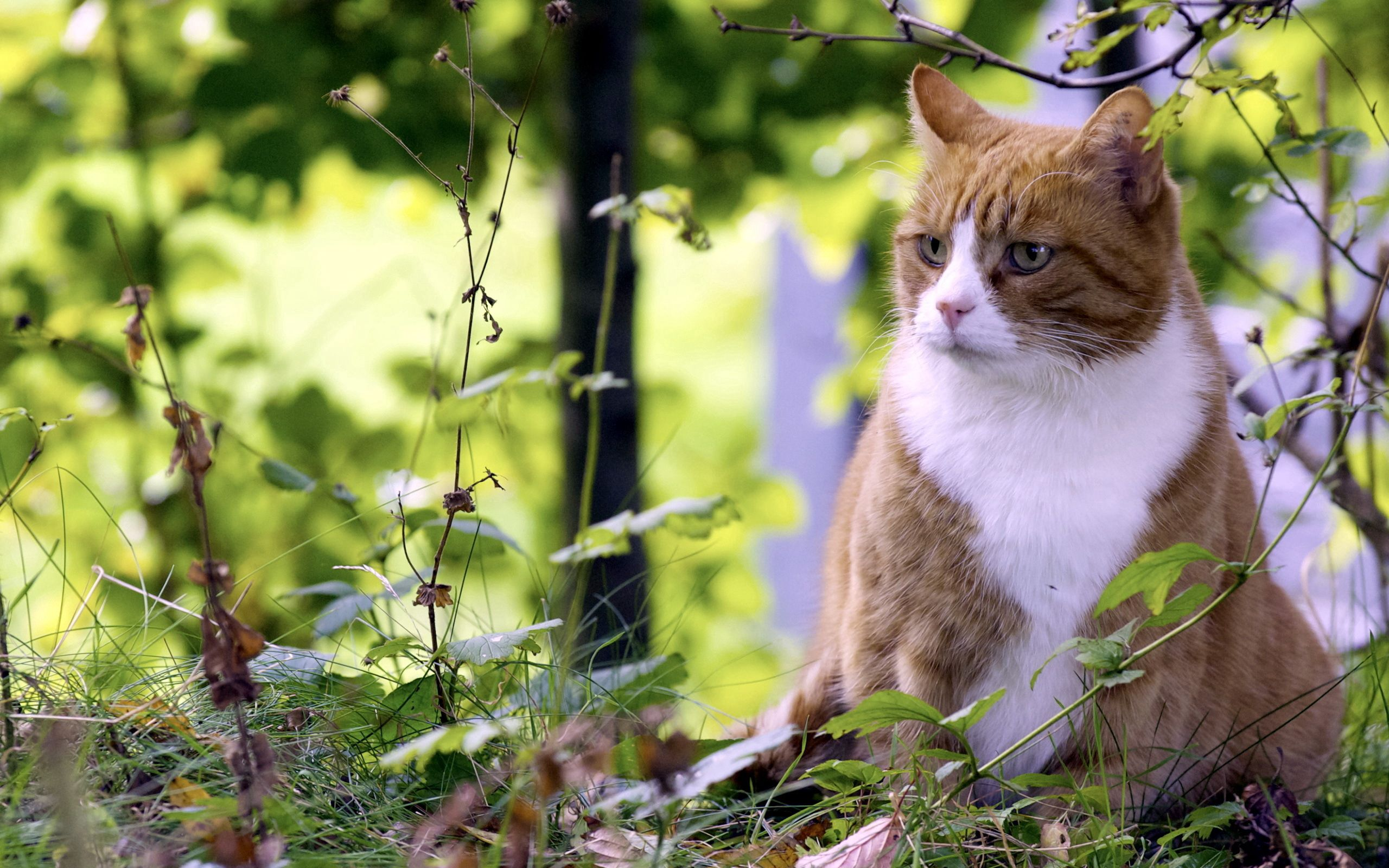 130706 download wallpaper Animals, Cat, Grass, Hunting, Hunt, Spotted, Spotty screensavers and pictures for free