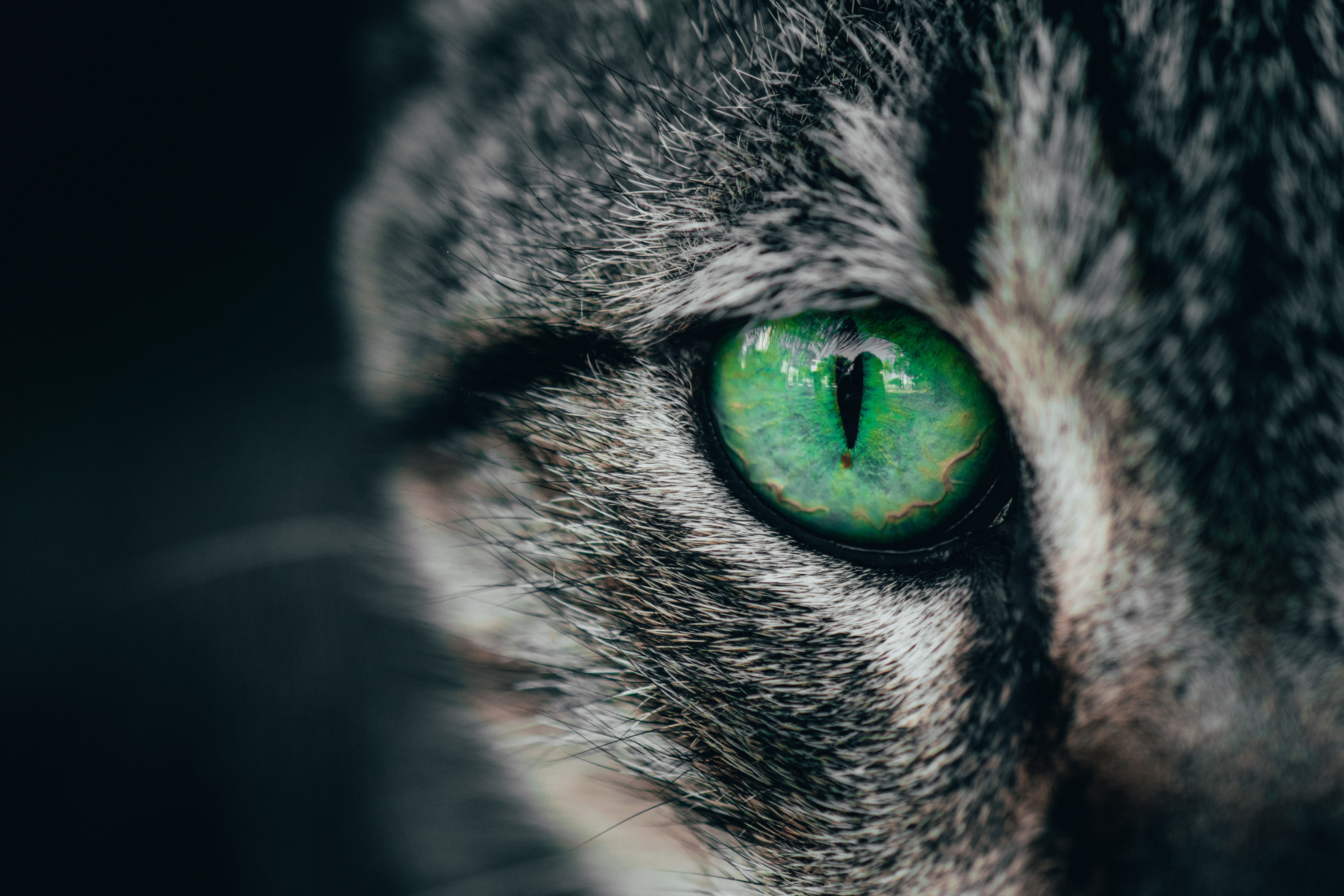 134122 download wallpaper Macro, Cat, Close-Up, Eye, Pupil screensavers and pictures for free