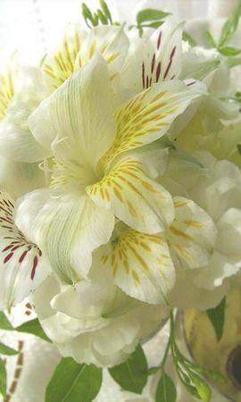 7976 download wallpaper Plants, Flowers, Lilies screensavers and pictures for free