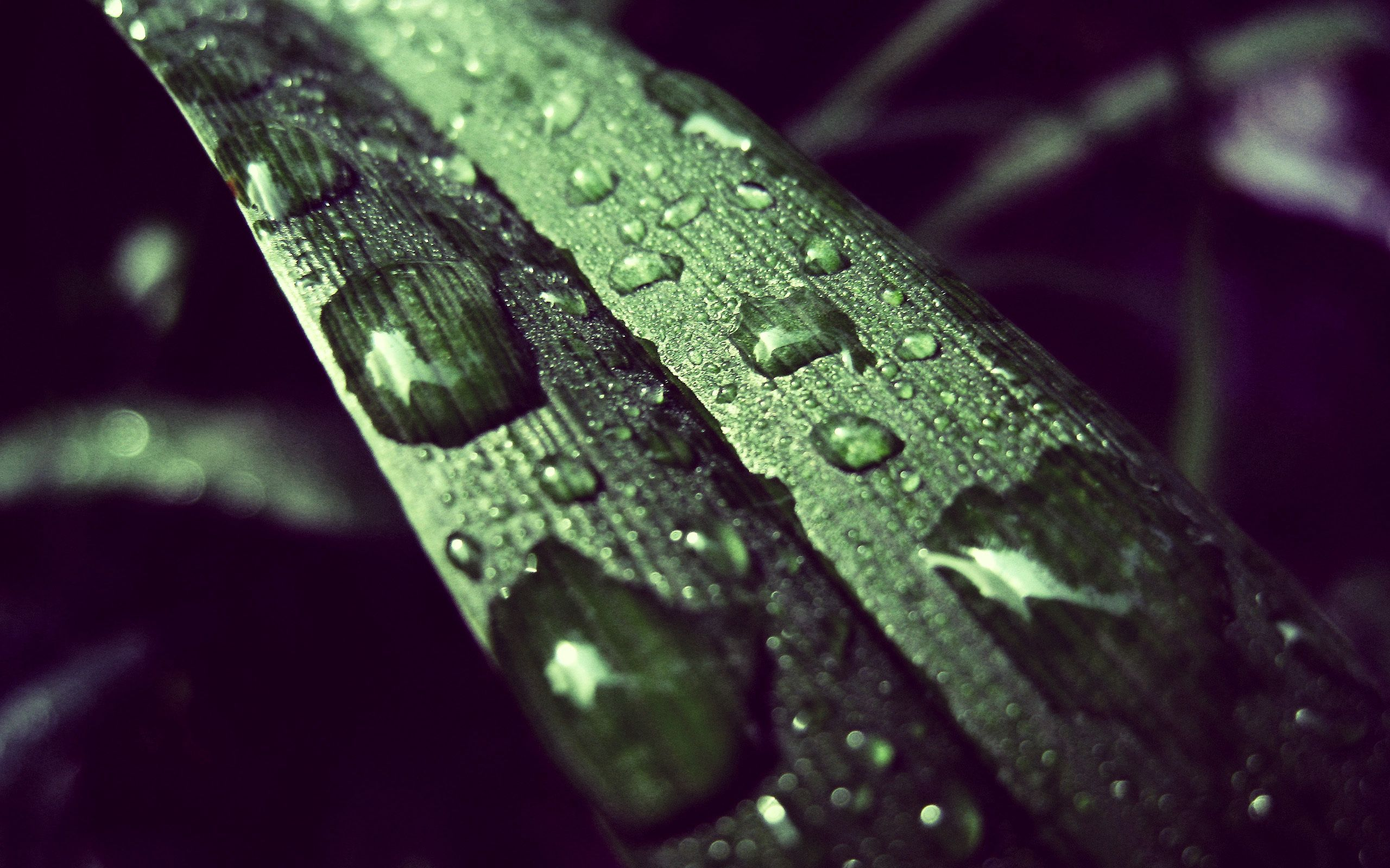 96567 download wallpaper Macro, Grass, Surface, Drops, Dew screensavers and pictures for free