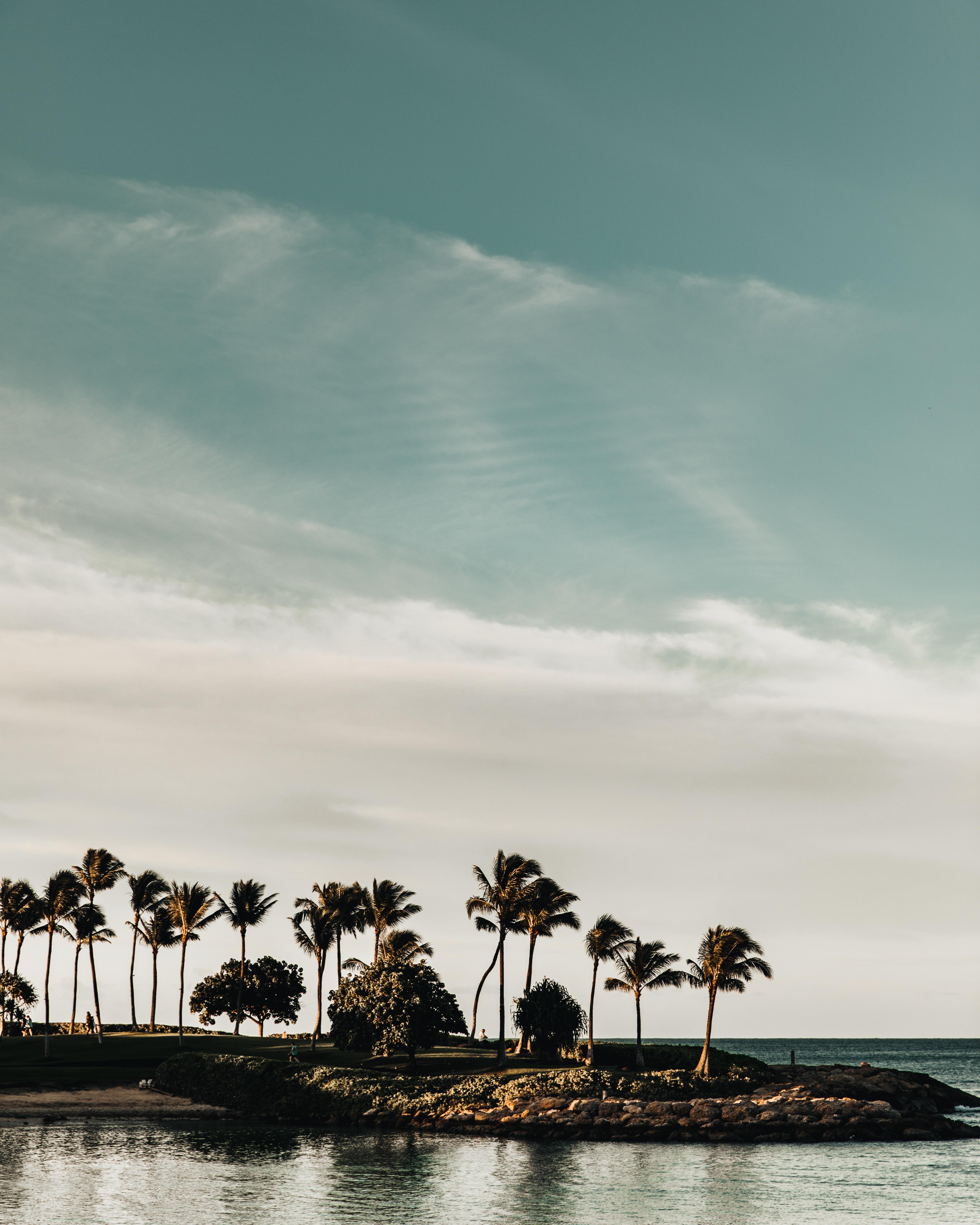 69374壁紙のダウンロード自然, 海岸, 海, 木, 風景, パームス-スクリーンセーバーと写真を無料で