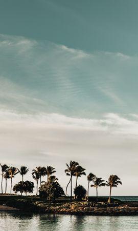69374 télécharger le fond d'écran Nature, Côte, Mer, Arbres, Paysage, Palms - économiseurs d'écran et images gratuitement