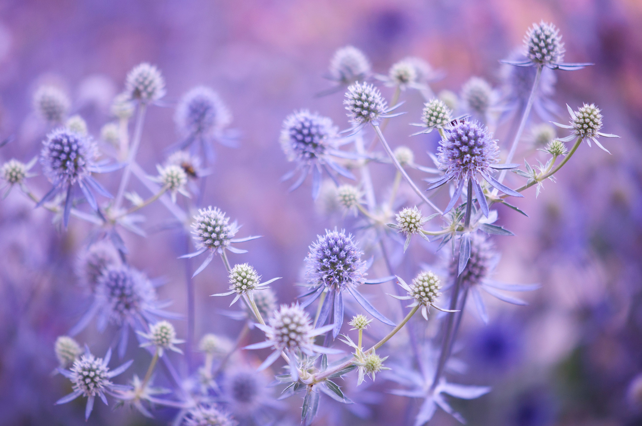 77773 Screensavers and Wallpapers Lilac for phone. Download Flowers, Lilac, Plant, Branches pictures for free