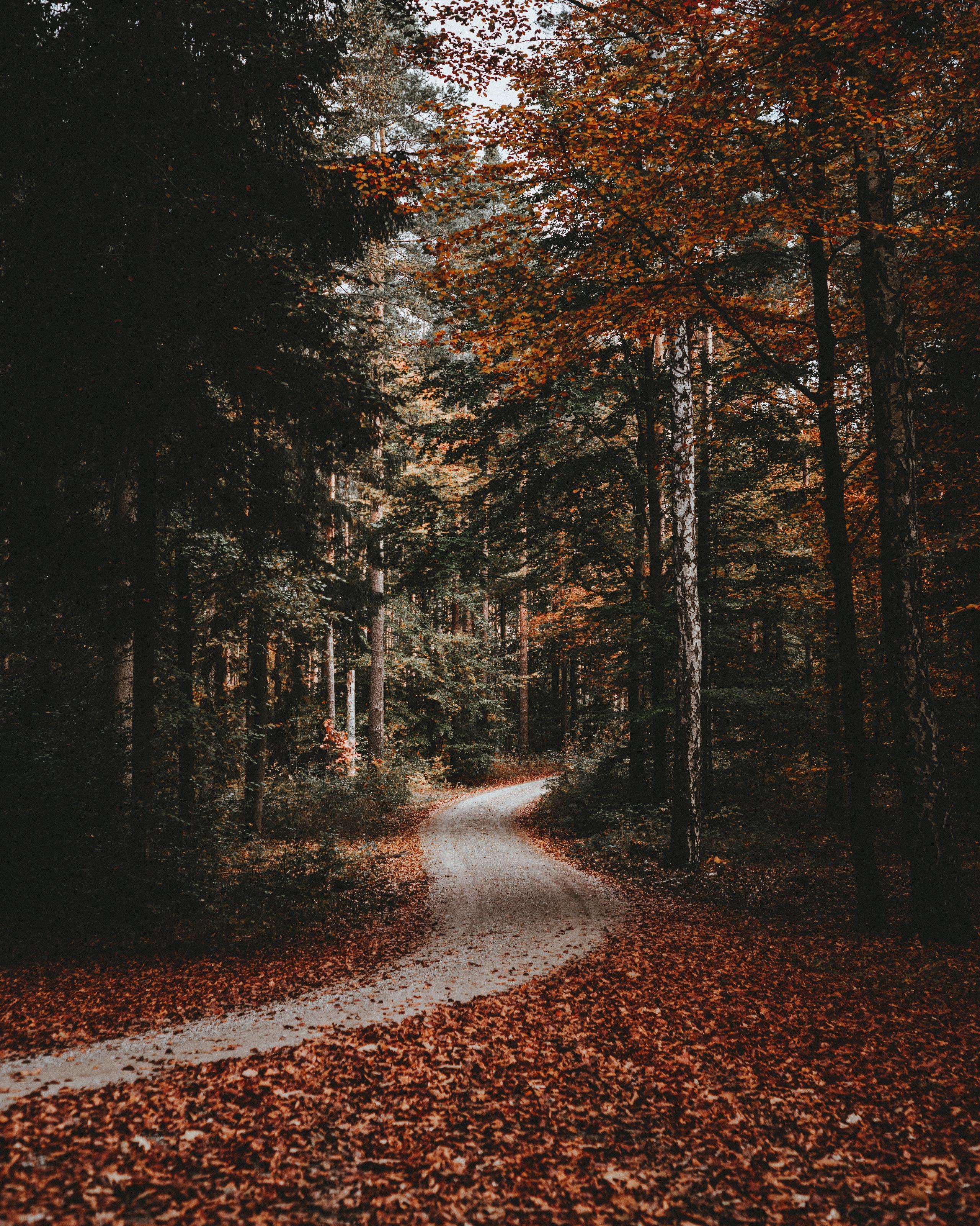 61175 завантажити шпалери Доріжка, Трек, Ліс, Осінь, Опале Листя, Полегле Листя, Природа - заставки і картинки безкоштовно