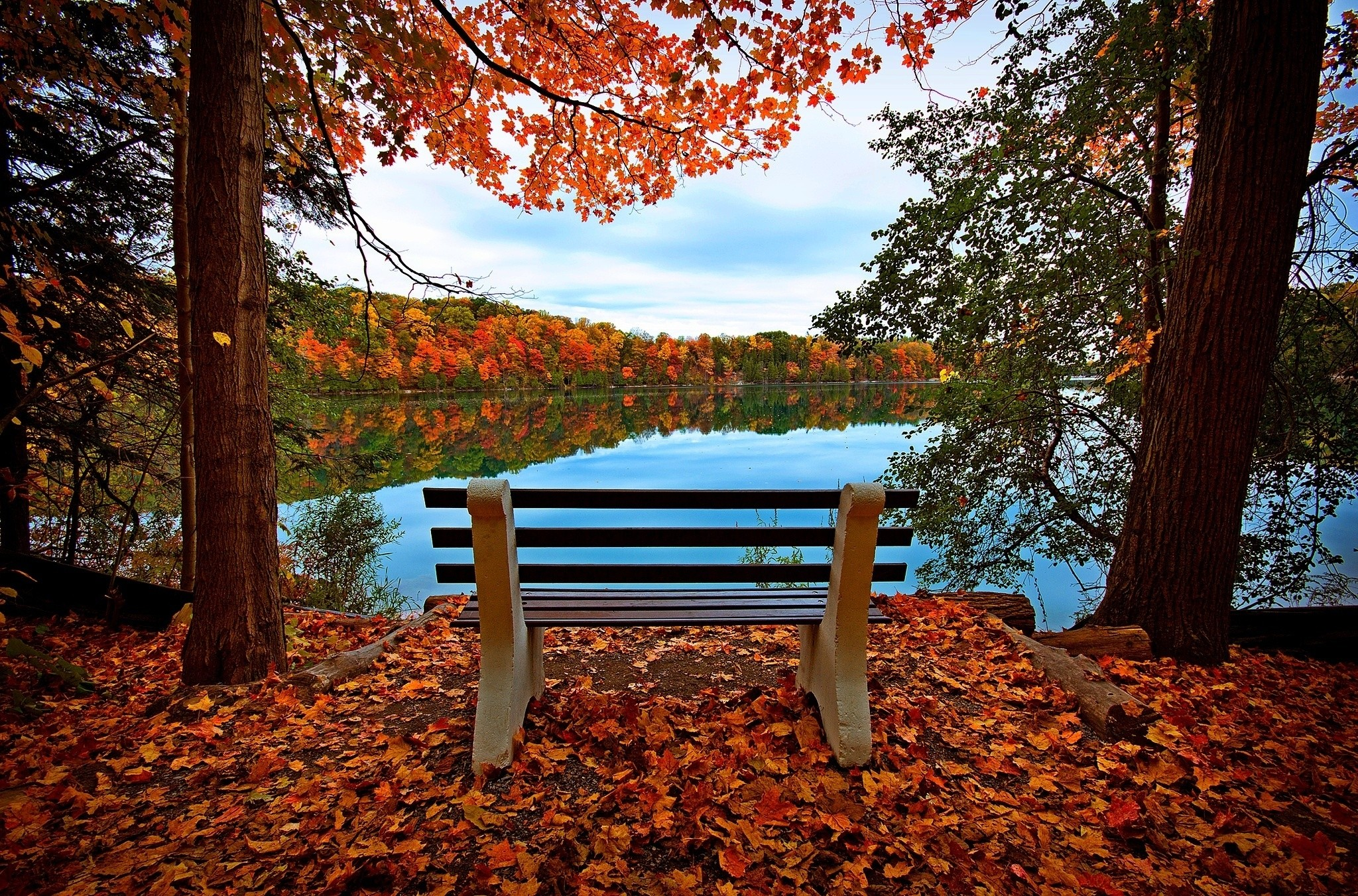 149009 download wallpaper Autumn, Nature, Rivers, Trees, Lake, Bench screensavers and pictures for free