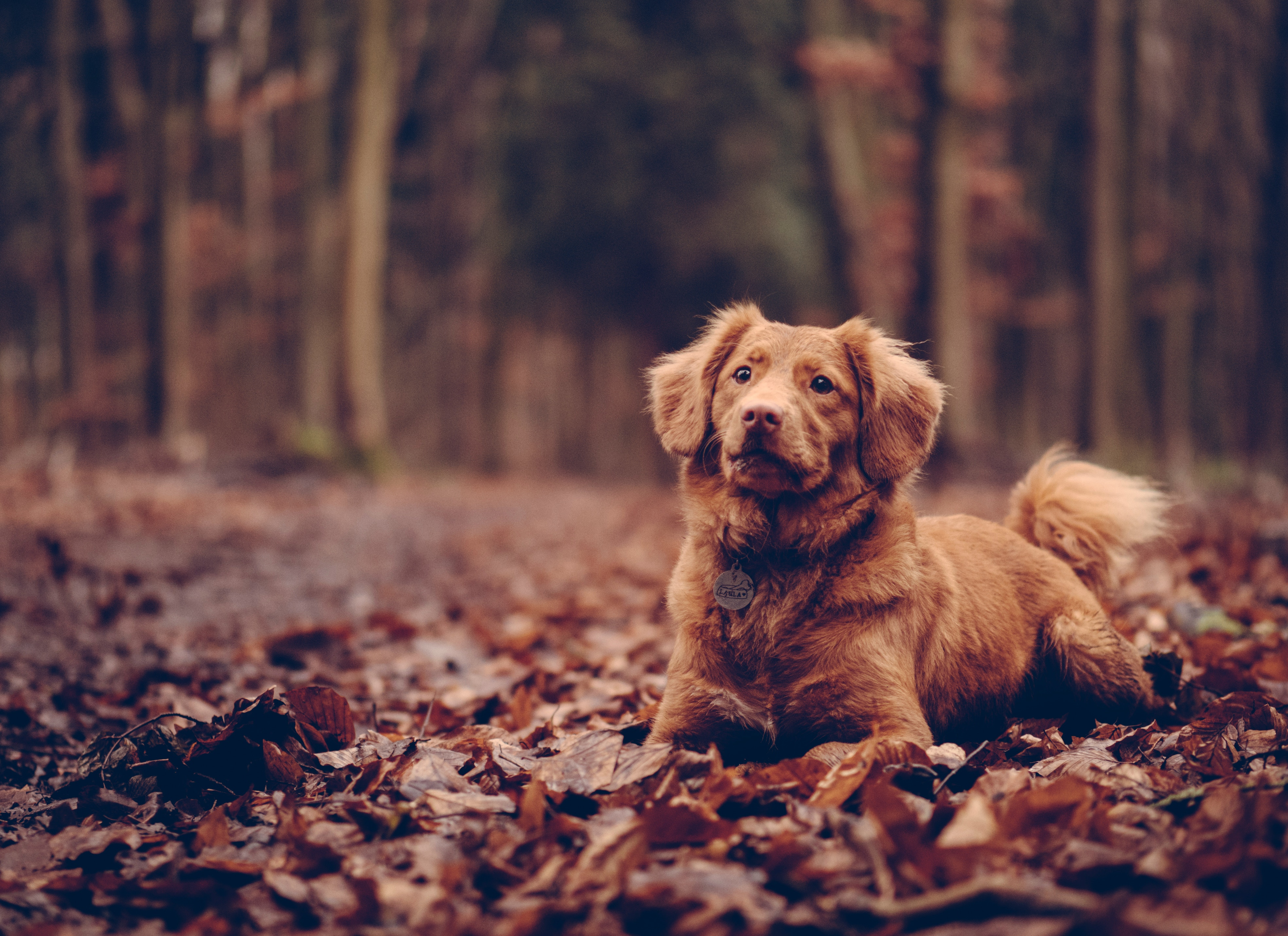 101883 Screensavers and Wallpapers Foliage for phone. Download Animals, Dog, Foliage, Is Sitting, Sits pictures for free