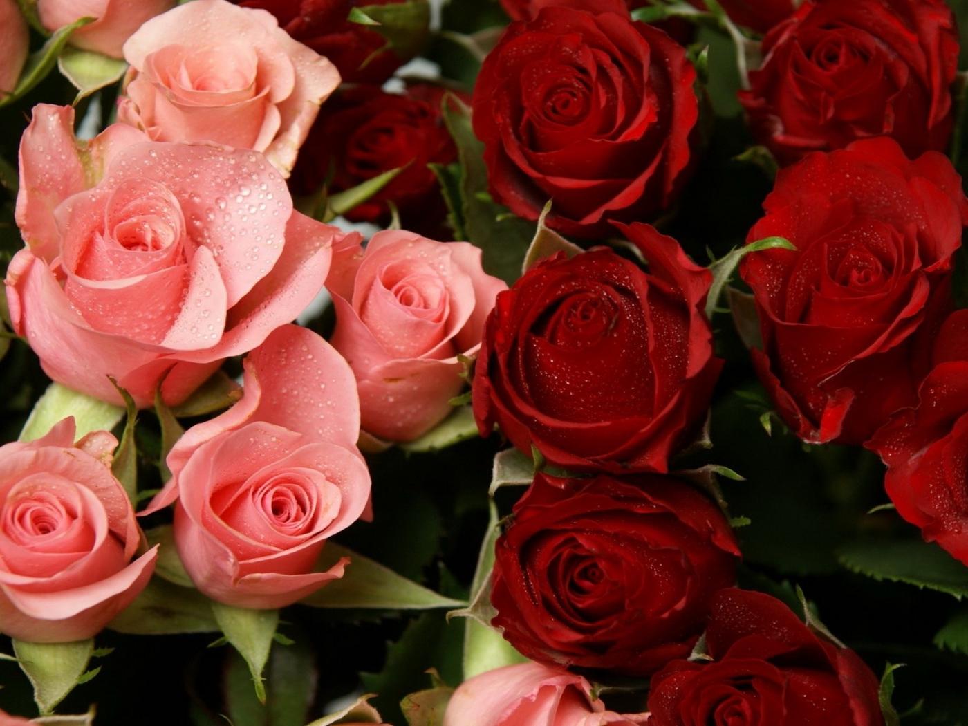 47973 скачать обои Растения, Цветы, Розы - заставки и картинки бесплатно