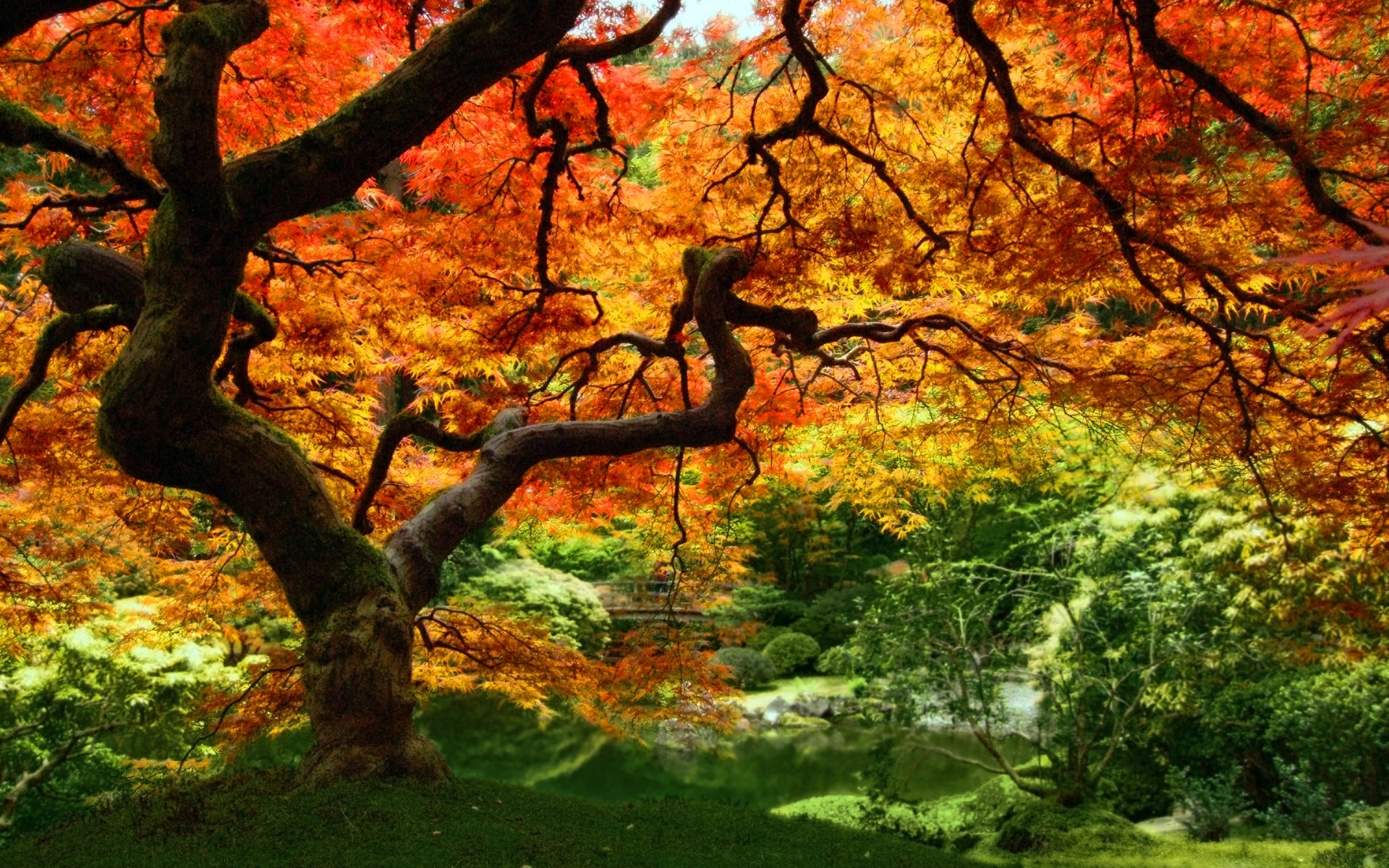 Скачать картинку Растения, Пейзаж, Деревья, Осень в телефон бесплатно.