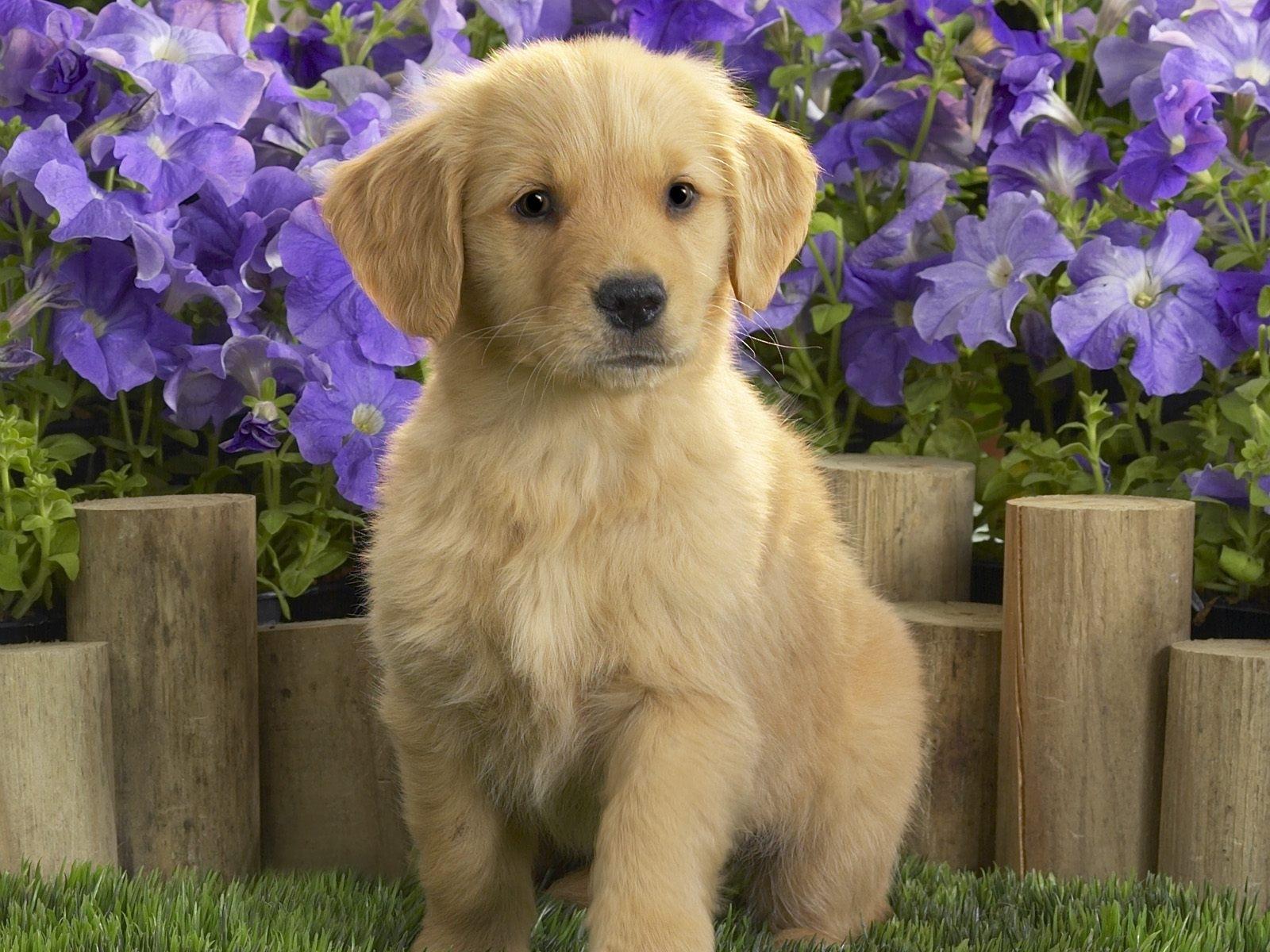 Handy-Wallpaper Tiere, Hunde kostenlos herunterladen.