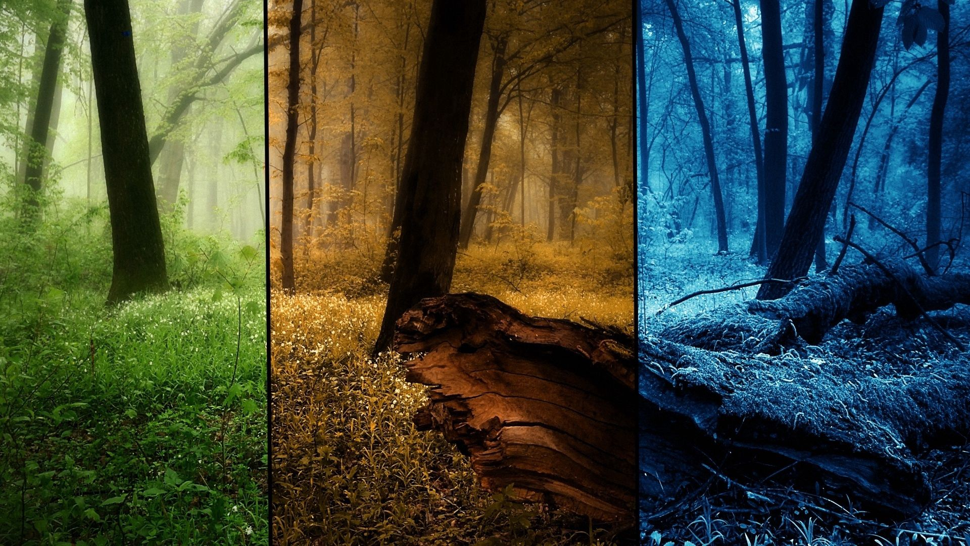 141915 download wallpaper Nature, Forest, Seasons, Pictures, Trees, Summer, Autumn, Winter screensavers and pictures for free