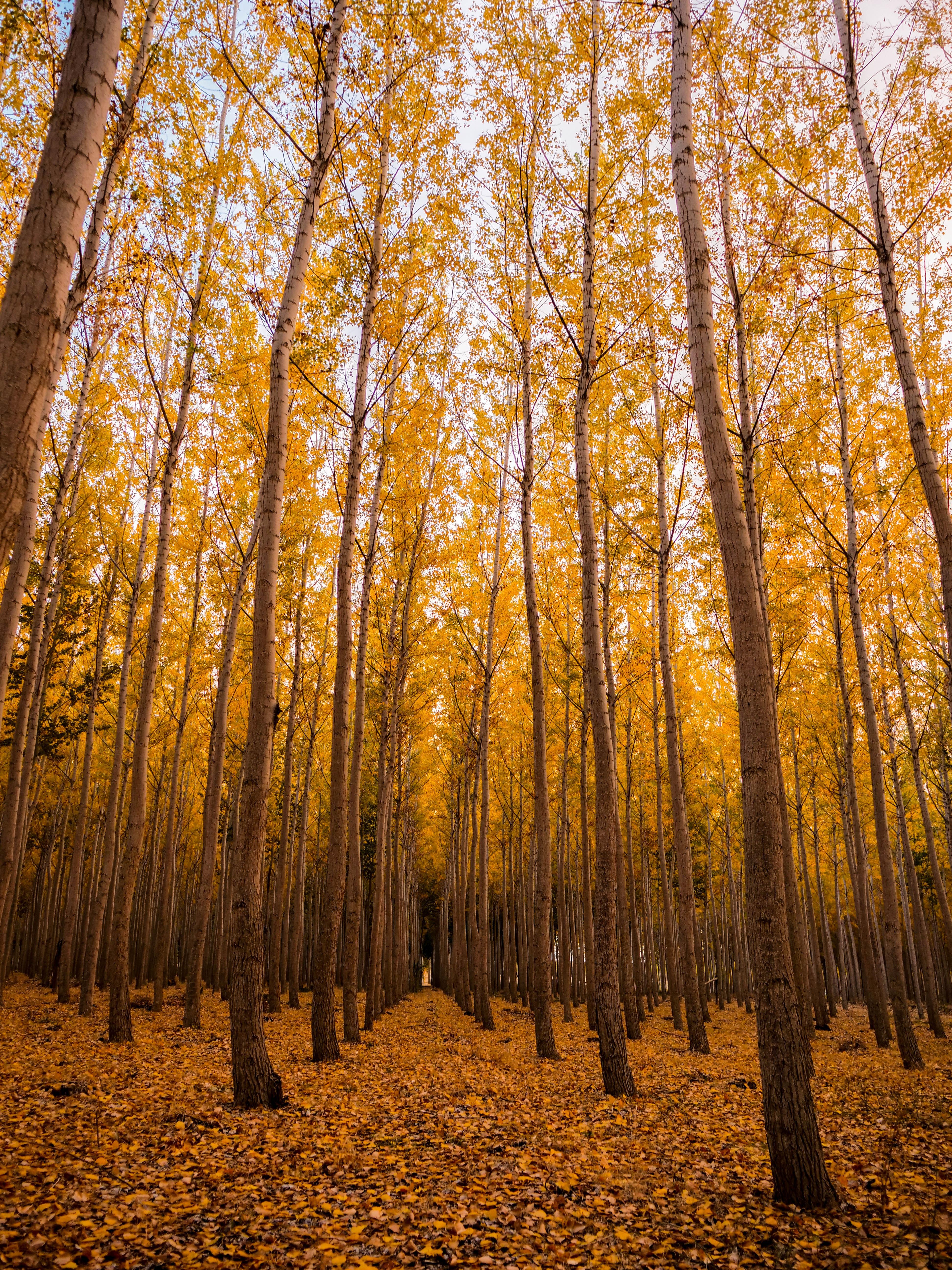 157457 завантажити шпалери Природа, Осінь, Ліс, Листя, Дерева - заставки і картинки безкоштовно