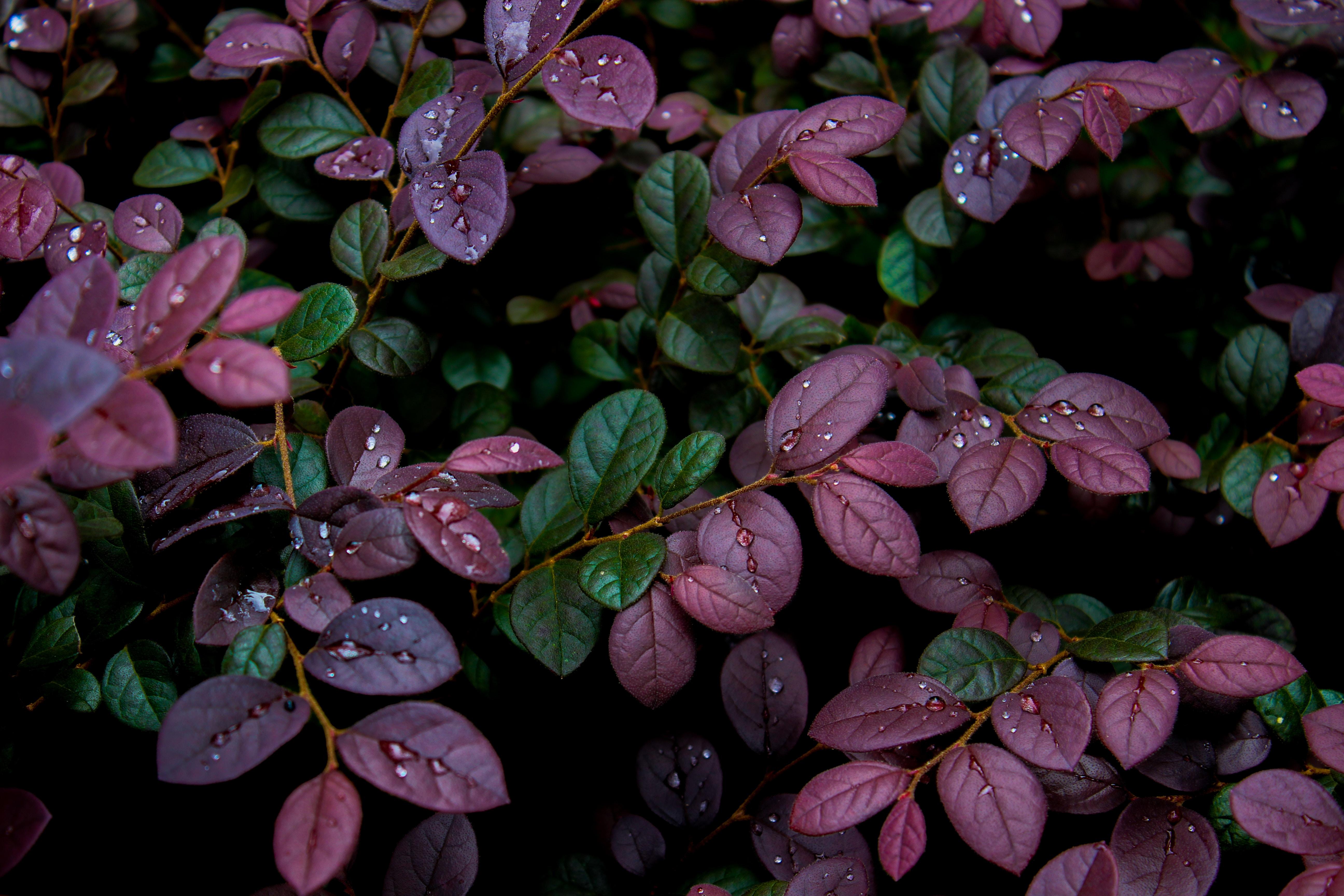 119846 скачать обои Листья, Влага, Растение, Природа, Капли, Роса - заставки и картинки бесплатно