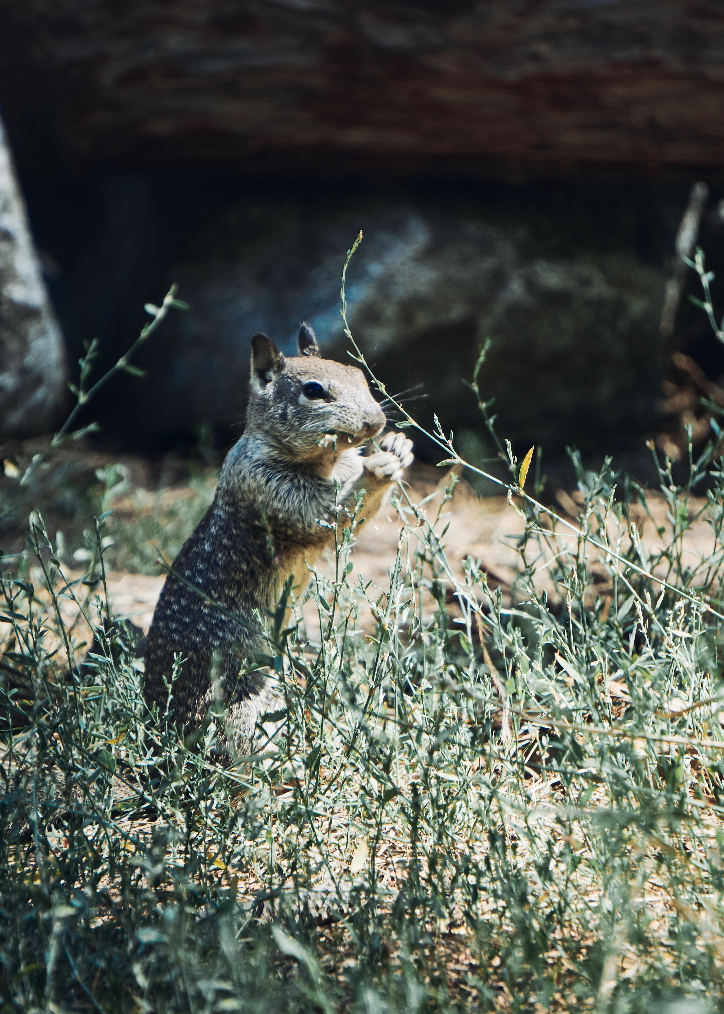 101845 download wallpaper Animals, Squirrel, Rodent, Animal, Grass, Wildlife screensavers and pictures for free