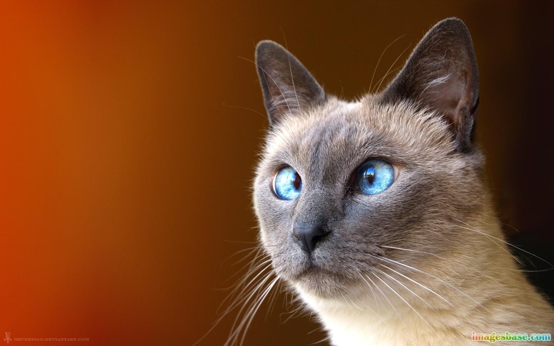 1118 скачать обои Юмор, Животные, Кошки (Коты, Котики) - заставки и картинки бесплатно