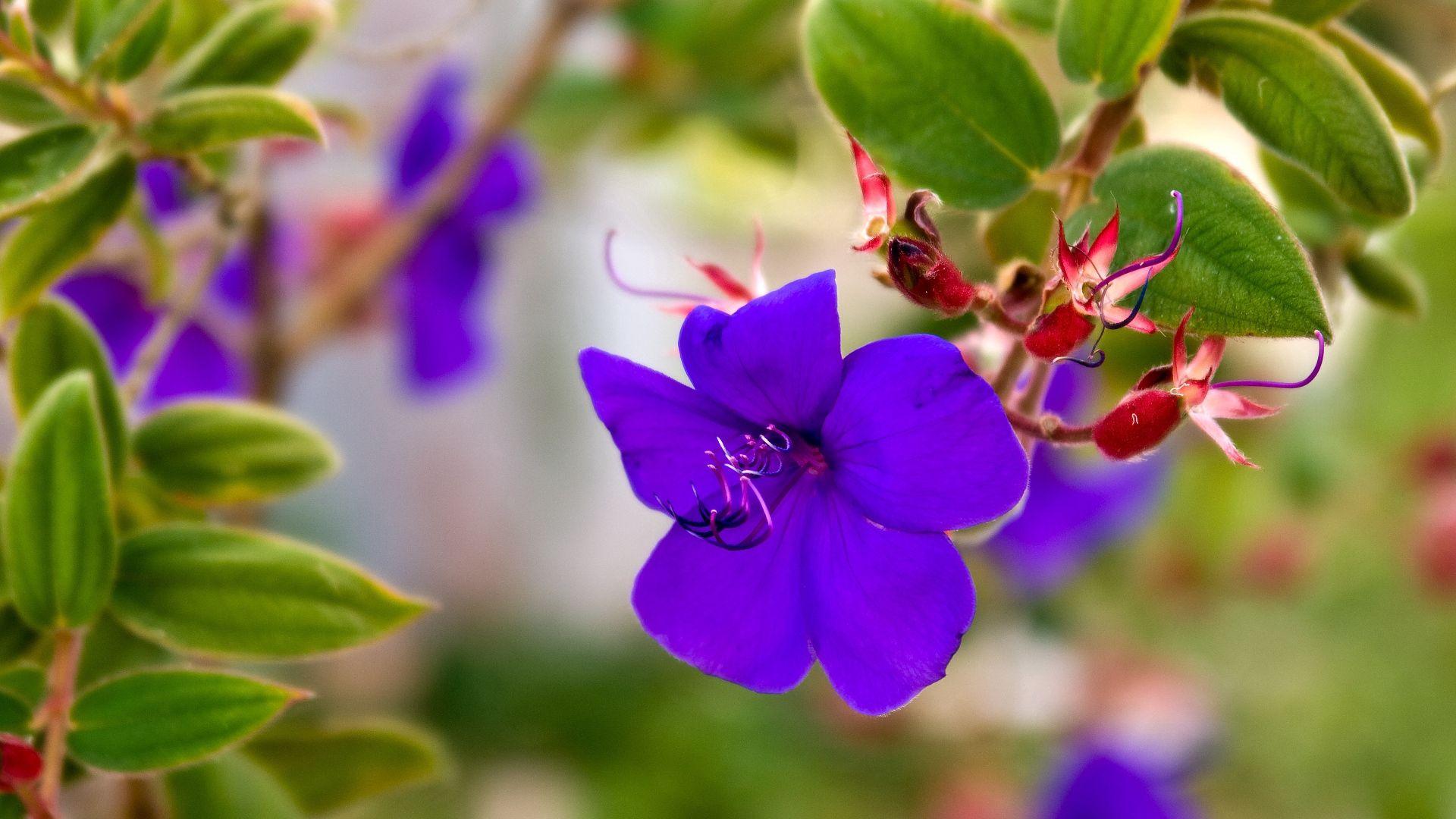 手機的104417屏保和壁紙紫罗兰。 免費下載 宏, 紫色, 紫罗兰, 草, 浅色, 小的, 小, 花瓣, 花卉 圖片