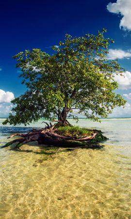 28010 скачать обои Пейзаж, Деревья, Небо, Море, Облака - заставки и картинки бесплатно