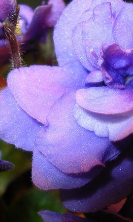 8822 скачать обои Растения, Цветы - заставки и картинки бесплатно