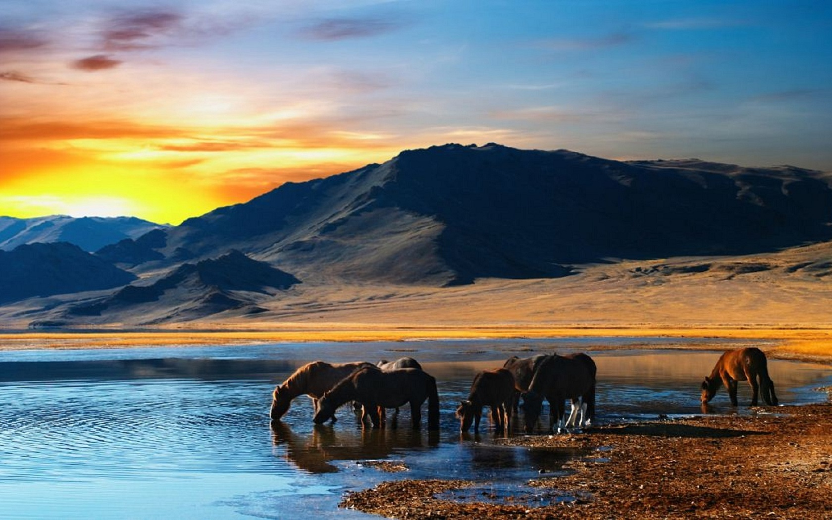 44640 download wallpaper Animals, Landscape, Nature, Mountains, Horses screensavers and pictures for free