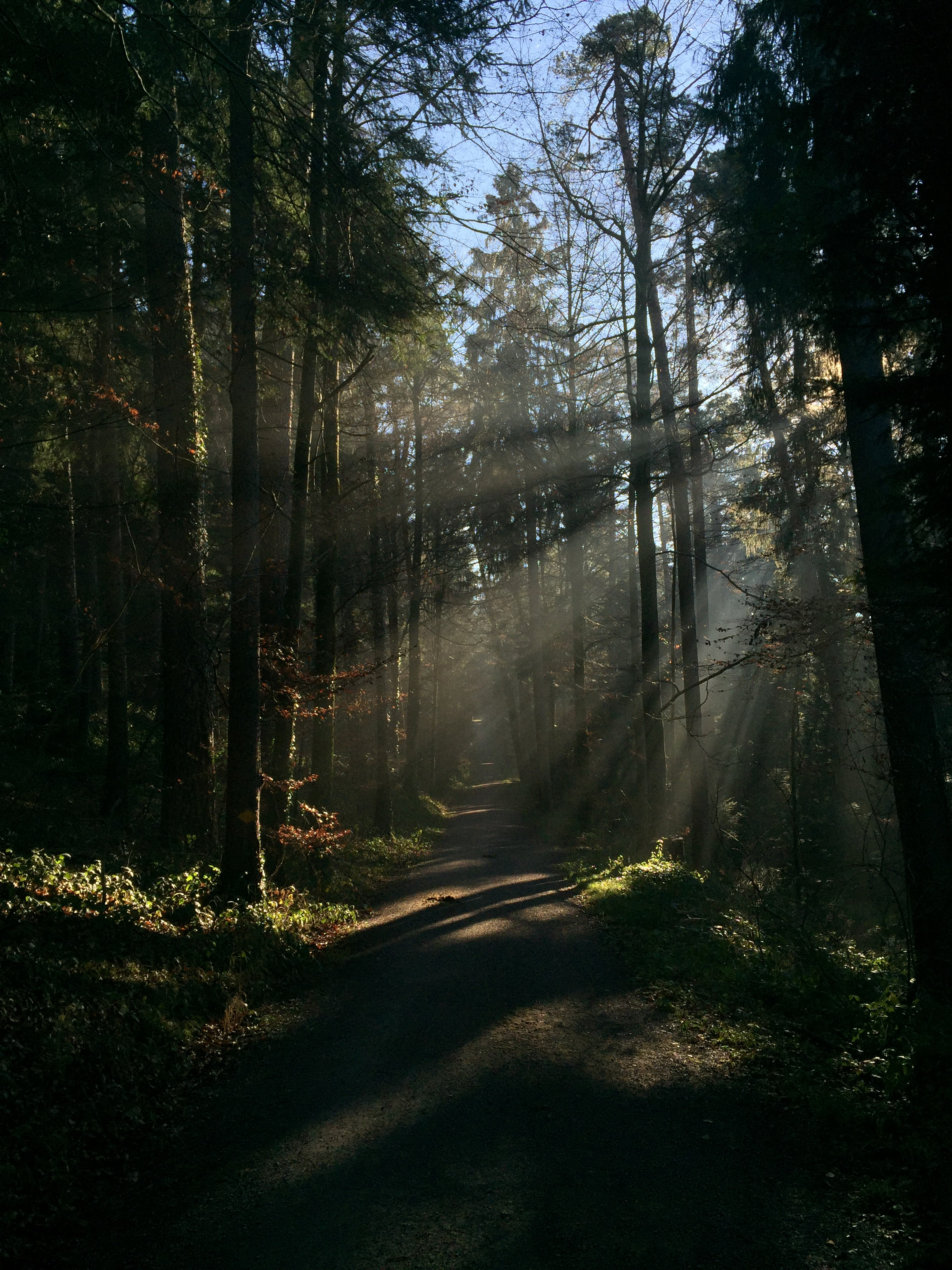 109322 Screensavers and Wallpapers Beams for phone. Download Nature, Trees, Beams, Rays, Forest, Path, Trail pictures for free
