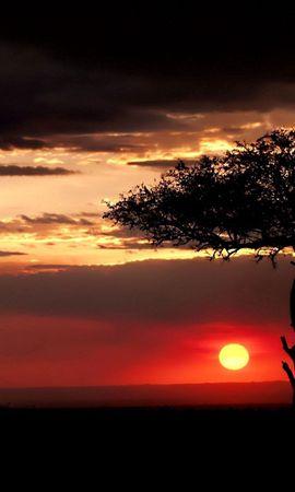 75340 скачать обои Природа, Саванна, Дерево, Одинокое, Закат, Вечер, Солнце - заставки и картинки бесплатно
