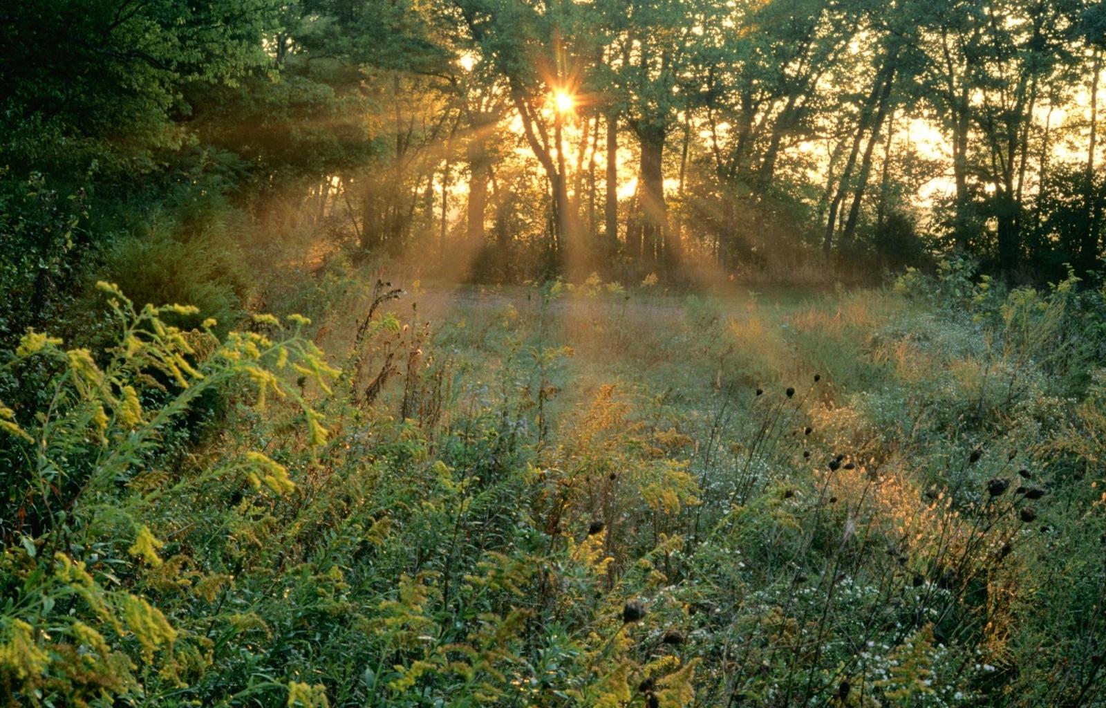 5414 скачать обои Пейзаж, Деревья, Трава, Солнце - заставки и картинки бесплатно