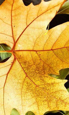 26353 скачать обои Растения, Фон, Осень, Листья - заставки и картинки бесплатно