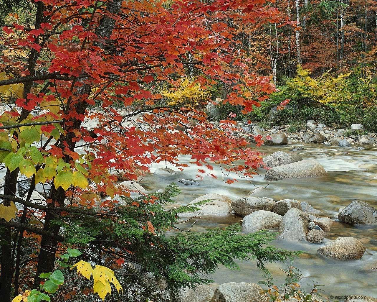 3941 скачать обои Пейзаж, Река, Деревья, Камни, Осень - заставки и картинки бесплатно