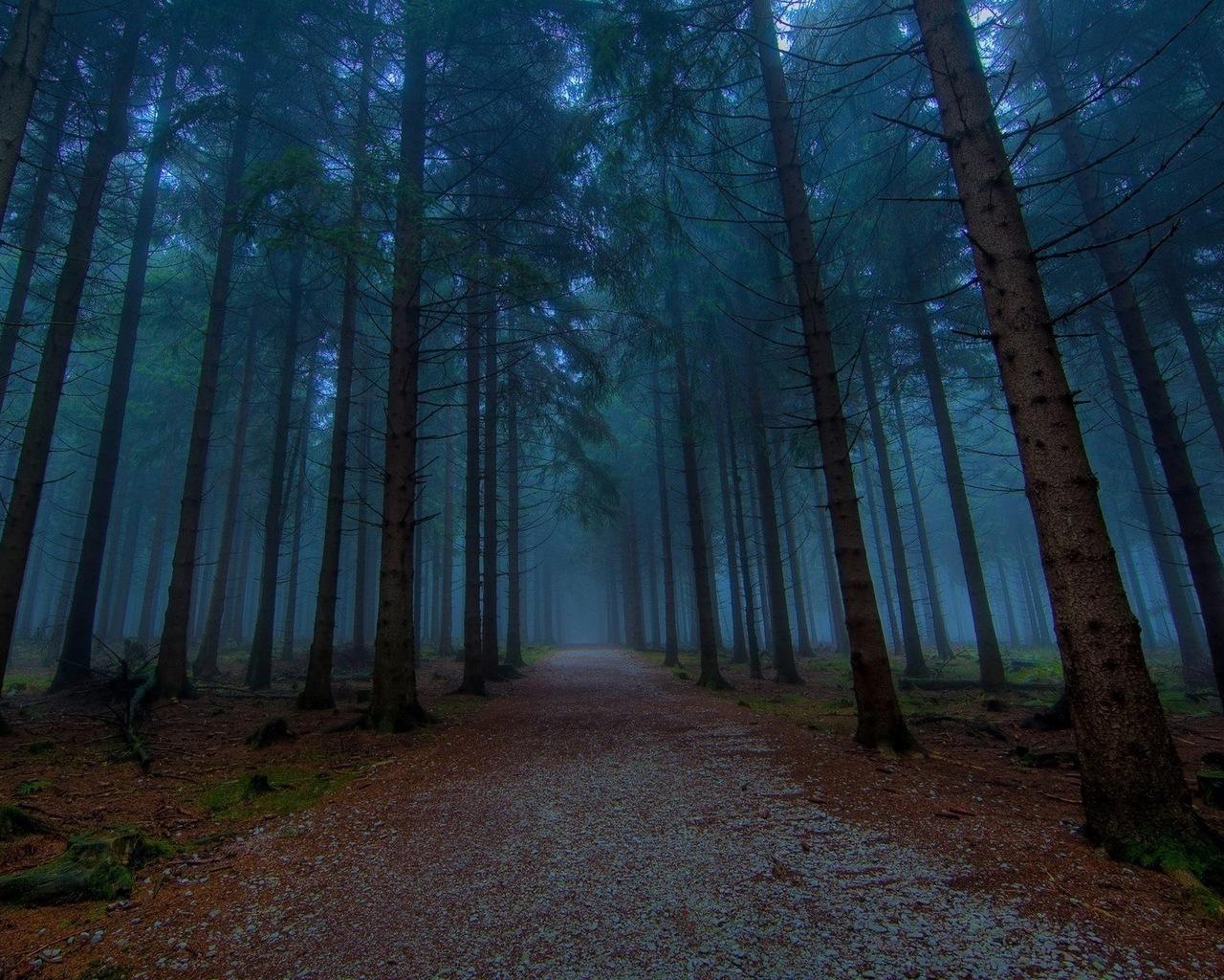 17468 скачать обои Пейзаж, Деревья, Дороги - заставки и картинки бесплатно
