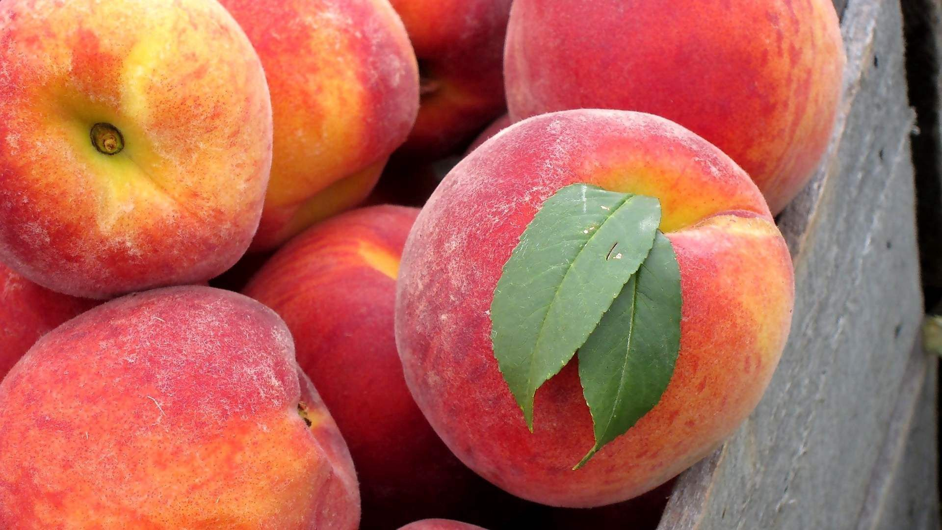 113996 Screensavers and Wallpapers Fruits for phone. Download Food, Peaches, Leaves, Fruits pictures for free