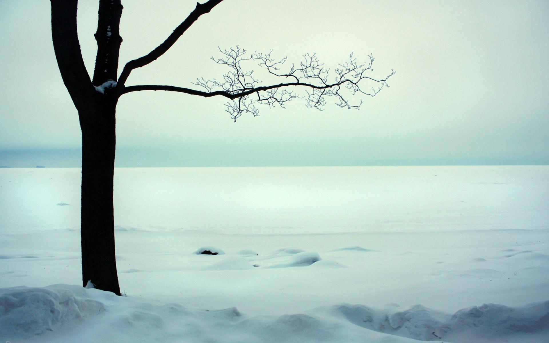 78824 скачать обои Природа, Дерево, Ветви, Голое, Снег, Холод - заставки и картинки бесплатно